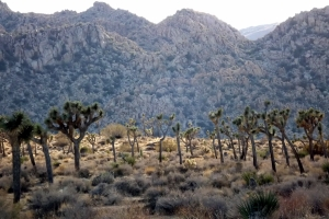 Joshua Tree scenery