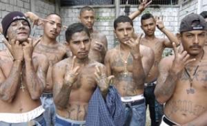 MS 13 gang members